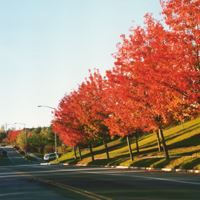 Fall Roadside in Danville